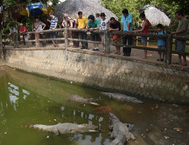 krokodile-beobachten